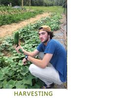 harvesting-3