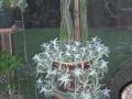 Braided Cactus