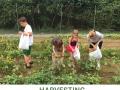 Garden-Harvesting